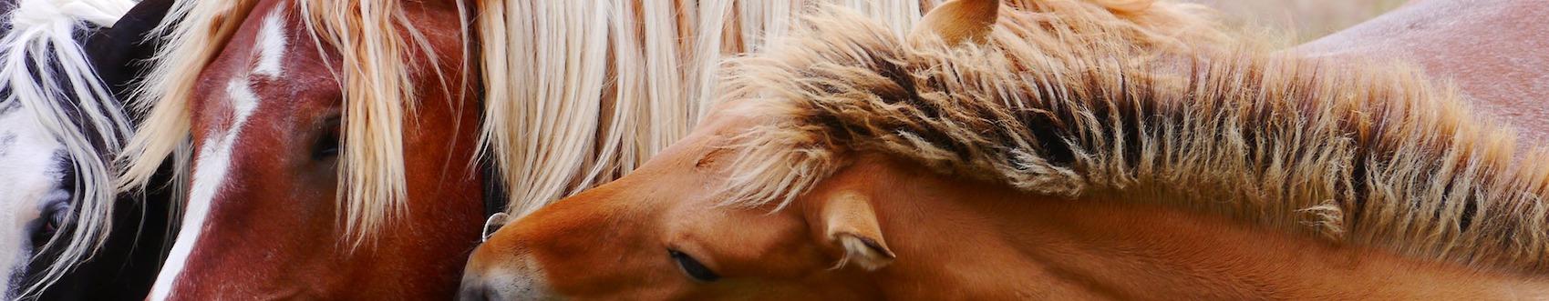 horses-wicstun vets