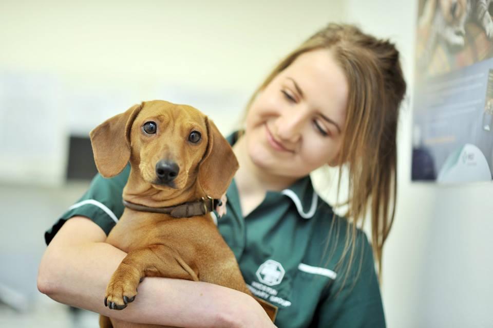 Jenny Fielding - Vet Nurse at Wicstun Vets, Pocklington
