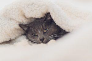Cat Undercovers