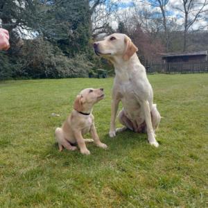 hugo and mum