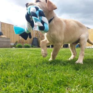 Hugo the Hearing Dog